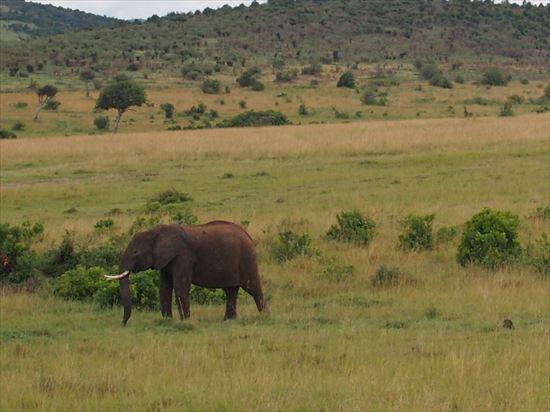 マサイマラ国立保護区のサファリツアーに参加。最高でした~!!