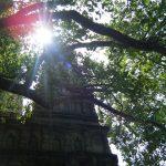 ブッダが悟りを開いた座禅法を教える、インドの瞑想教室