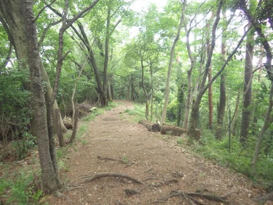 神奈川のおすすめハイキングコース:飯山観音~白山順礼峠
