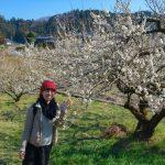 越生梅林の見ごろはいつ?開花状況と梅まつりの様子をレポート!