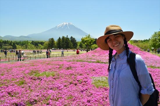 富士芝桜2021の見頃はいつ?12年分のデータから見頃の時期を徹底予想!