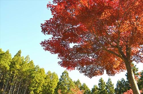 関八州見晴台・紅葉ハイキングへ♪