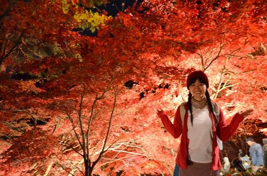 大山(神奈川)の紅葉ライトアップへ行く前に知っておきたいこと