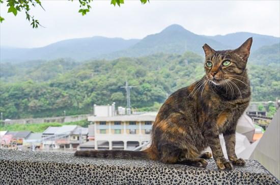 台湾の猴硐(ホウトン)猫村の行き方は?ネコたちに癒された~!