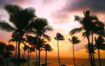 ハワイ旅行が安い時期はいつ?航空券とツアー料金の最安値が判明!