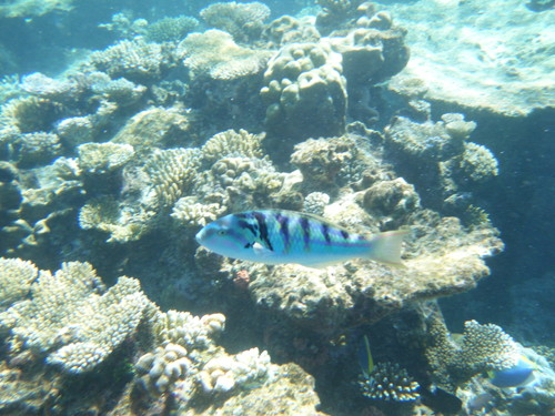 モルディブのサンゴと魚